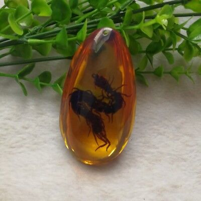 Yellow Burmite Amber Insects Stone Real Centipede Pendant Necklace