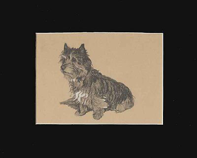 "Cairn Terrier Dog Print by Cecil Aldin 8X10"" Matted 1934"