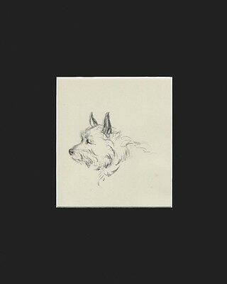 "Cairn Terrier Dog Portrait Sketch by Lucy Dawson 1946  8X10"" Matted Print"