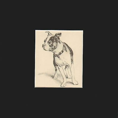 Vintage Boston Terrier Dog, Sketch by Diana Thorne 1936 Matted Print 9x9