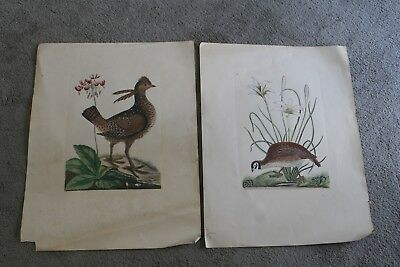 2 Vintage Williamsburg Reproduction Nature Art Ground Bird Bookplate Prints as i