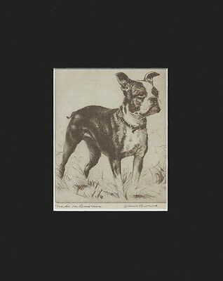 Vintage Boston Terrier Puppy Dog Print 1936 by Diana Thorne 8 X 10 Matted NICE!
