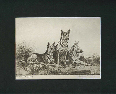 German Shepherd Dogs Etching Print 1935 by Diana Thorne 9 X 12 Matted