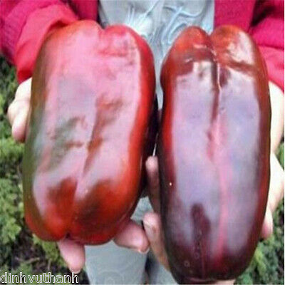 Giant Sweet Pepper Seeds - 200 Seeds