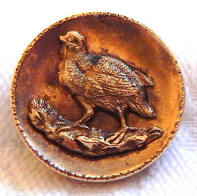 "1"" ANTIQUE 19th CENTURY GILT BRASS HUNT BUTTON w/BRASS QUAIL BIRD ESCUTCHEON"