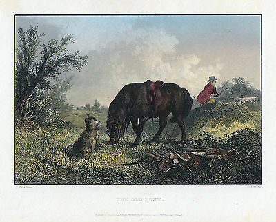 The old Pony Original Stahlstich 1843 das alte Hund Jagd Hunting dogs ACKERMANN