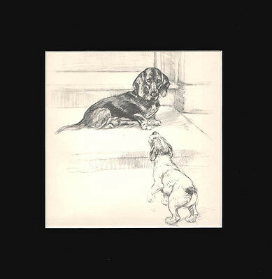 Dachshund  Puppy Dog  by G. Vernon Stokes 1936 Dry Point Matted Print LG 12x12