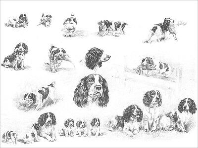 English Springer Spaniel Dogs by Marguerite Kirmse 1935 8 New Blank Note Cards