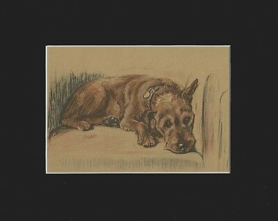 Irish Terrier Dog Print 1937 by Lucy Dawson 8 X 10 Matted