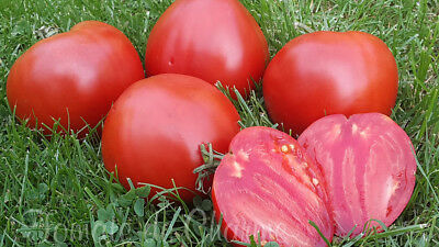 10 graines de tomate rare ancienne Etoiles Rubis excellente productive heirloom