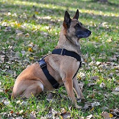 "2"" wide Polyweb Tracking Harness for Dogs from Leerburg"