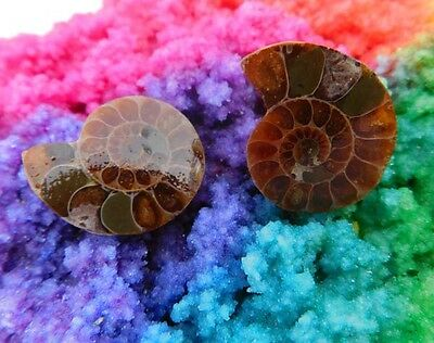 44 Cts. 100% Natural Matched Pair Of Ammonite Shell  Mineral Specimen (NH114)