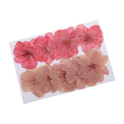 20pcs Pressed Real Flower Adiantum Dried Cherry Blossom for Phone Case Decor