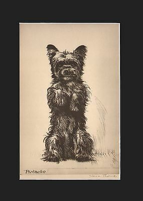 Carin Terrier Dog BEGGING! Etching Print 1935 by Diana Thorne 9 X 12 Matted