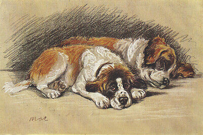 Saint Bernard Puppies by Lucy Dawson 1940  ~ LARGE New Blank Note Cards