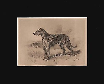 Antique Irish Wolfhound Dog Print  by Arthur Wardle 1897 Matted 8X10