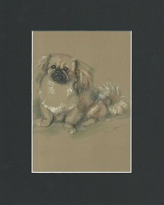 Sweet Pekingese Dog 1946 Print BY LUCY DAWSON 8 X 10 Matted VINTAGE