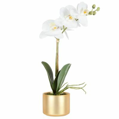 NEW freedom White Phalaenopsis Orchid In Luxe Pot 41Cm