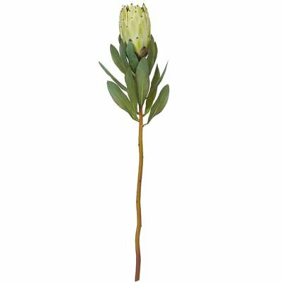 NEW freedom Green Rogue Protea Stem 65Cm Selected Stores Green