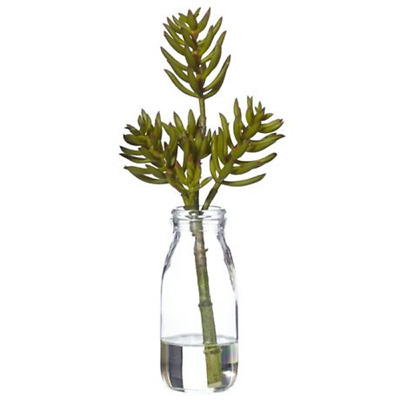NEW freedom Foxtail Succulent 31Cm In Bottle