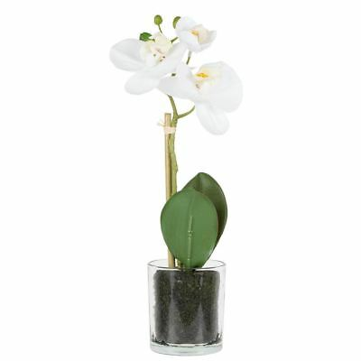 NEW freedom White Phalaenopsis Orchid In Glass Vase 33Cm