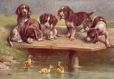 Pointer Dog Puppies Carl Reichert Drawing pre 1918   LARGE New Blank Note Cards