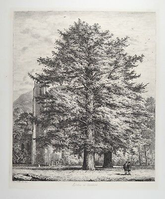 Jacob George Strutt 1825 - Larches at Dunkeld - Lärche Portraits of forest trees
