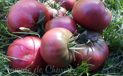 10 graines de tomate rare  BORDO  vegetable tomato seeds bio