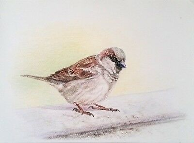 Drawing Wax Pencil On Paper Painting Bird Drawing Art Sparrow Realism Animal