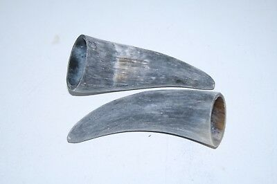 2 Cow horn tips ....  v2b82 ... Raw, unfinished cow horns.,.....