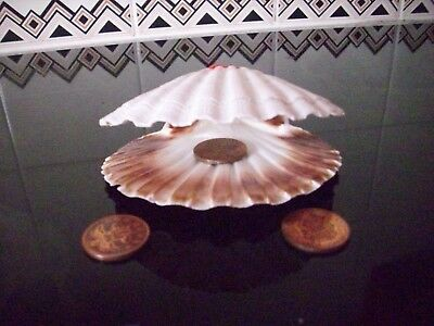 Selected King Scallop Shells 7 Top & bottoms Wedding Table Art & Crafts Seashell