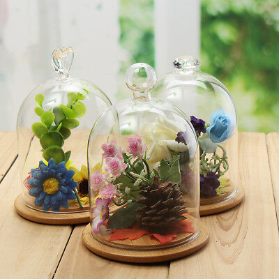 Glass Display Dome Cloche Bell Jar Flower Immortal Preservation With Wooden Base