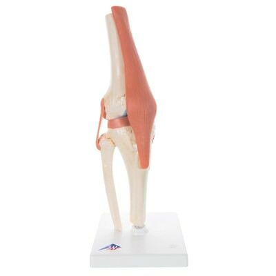 Deluxe Functional Knee Joint  1 EA