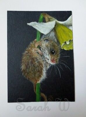 ACEO Original coloured pencils & watercolour painting-Harvest mouse by Sarah:)xx