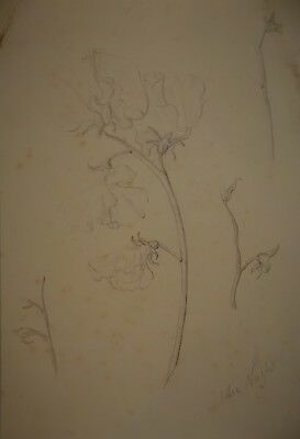 JOHN NASH - signed sketch - Fabulous floral study - # 5 of 5 - MODERN BRITISH