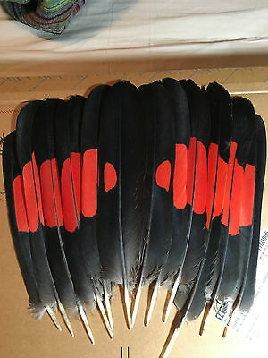 Redtail Black Cockatoo feathers   peyote fan set