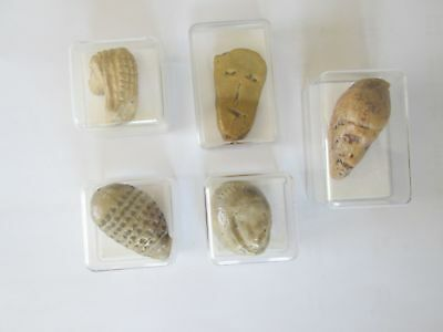 Set of 5 Paleolithic Head Venuses,  cast replicas