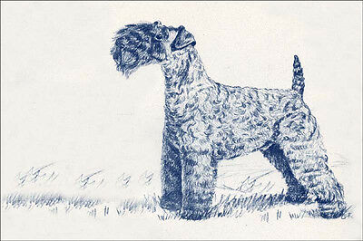 Kerry Blue Terrier Dog  Drawing by Gladys E.  Cook ~ LARGE New Blank Note Cards