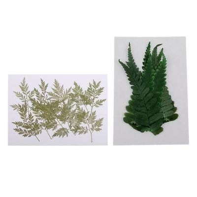 20pcs Pressed Real Dry Leaves Dried Flowers DIY Phone Case Decoration Crafts