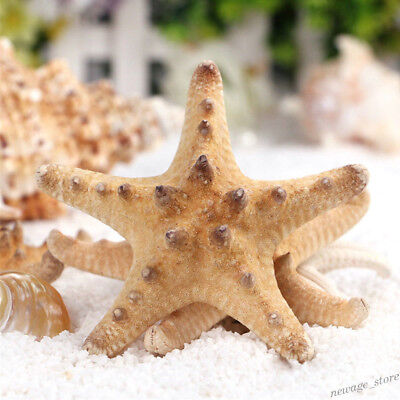 2pcs Horn Starfish Bleached White Nautical Aquarium Fish Tank Craft DIY Decor