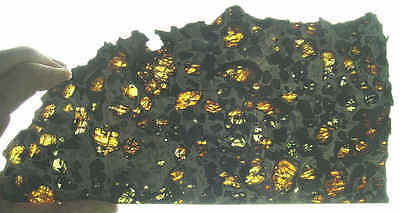 Esquel Pallasite 425 grams meteorite slice - by catchafallingstar.com