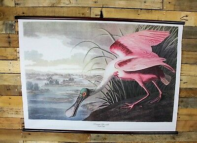 Vintage Style Birds Of America Pink Spoonbill Wall Hanging Wall Chart / Poster
