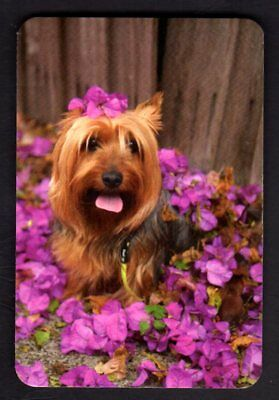 Swap/Playing Card - Cute Silky Terrier Among Bougainvillea