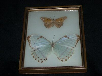 TWO Framed Light TanButterflies- Made in Brazil in Very Good Condition