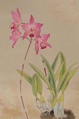 #9668 Japanese Hanging Scroll: RAN (Orchid)