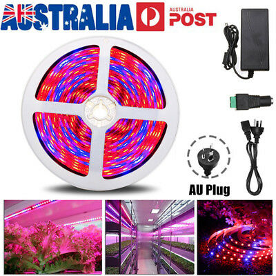 5M 5050 300 LED Plant Grow Light Strip Lamp Full Spectrum Red+Blue Veg Flower