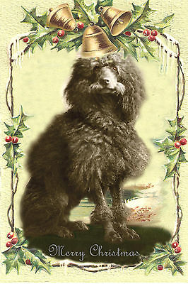 Poodle Dog Antique Photo New Blank Christmas Note Cards