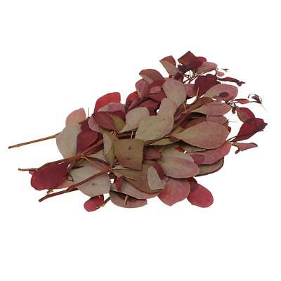 10 Pcs Natural Pressed Dried Flowers Leaves Ring Earrings Making Accessories