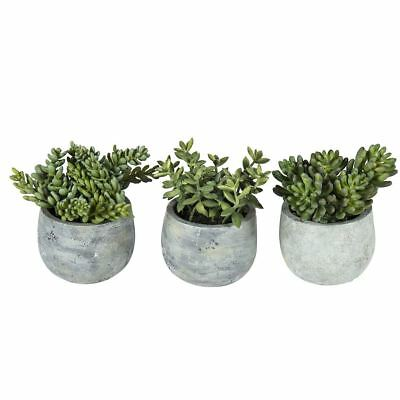 NEW freedom Rogue Succulent 11Cm In Cement Pot