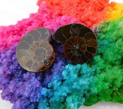 65 Cts. 100%Natural Pretty Matched Pair Ammonite Sell Minerals Specimen AJ595
